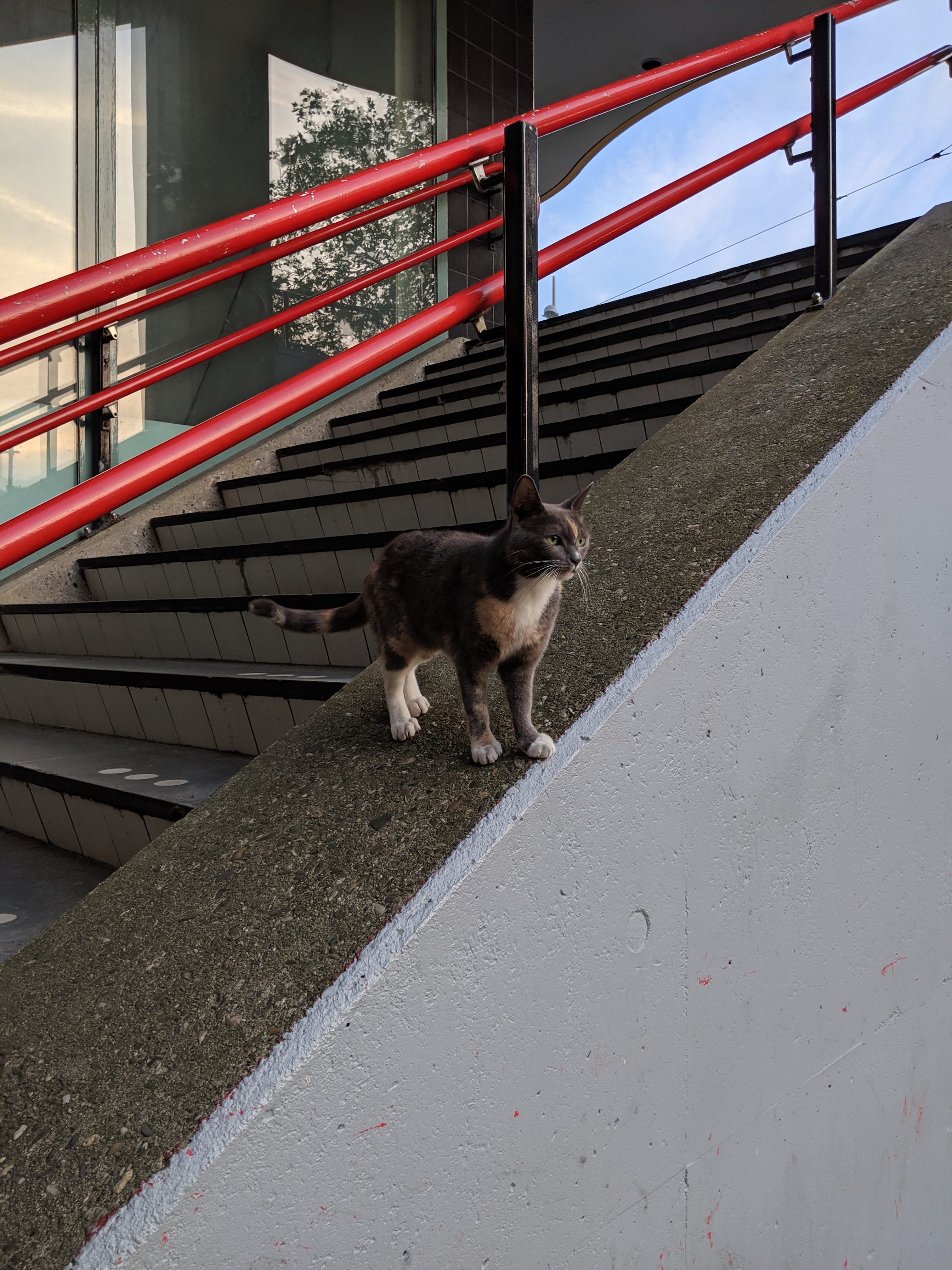 A cat at Velperpoort train station